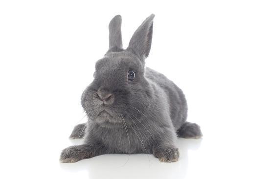 andrea-mascitti-rabbits-001