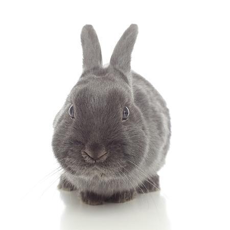 andrea-mascitti-rabbits-005