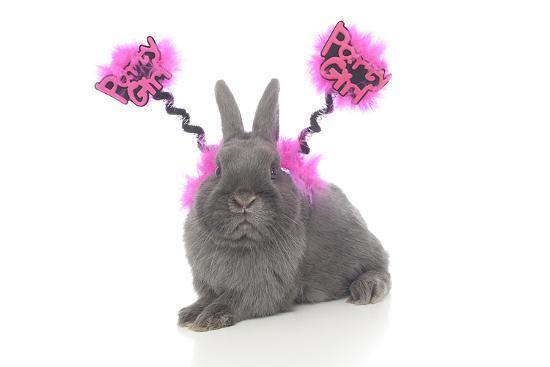 andrea-mascitti-rabbits-020