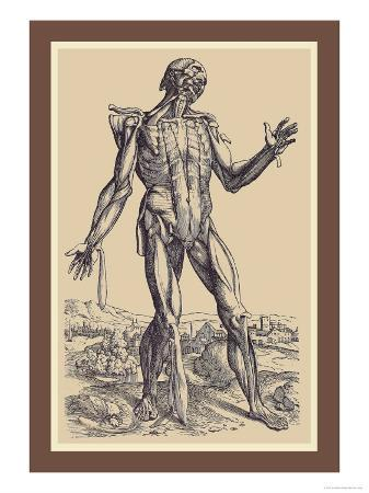 andreas-vesalius-the-fifth-plate-of-the-muscles