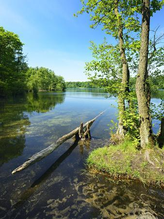 andreas-vitting-spring-at-the-gro-ensee-lake-near-hamburg-shore-with-alders-and-trunk-district-stormarn