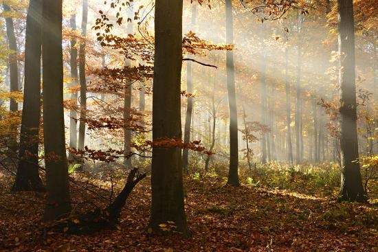 andreas-vitting-sunrays-and-morning-fog-deciduous-forest-in-autumn-ziegelroda-forest-saxony-anhalt-germany