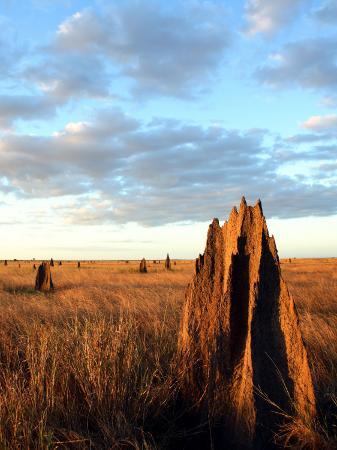 andrew-bain-termite-mounds-on-the-nifold-plain
