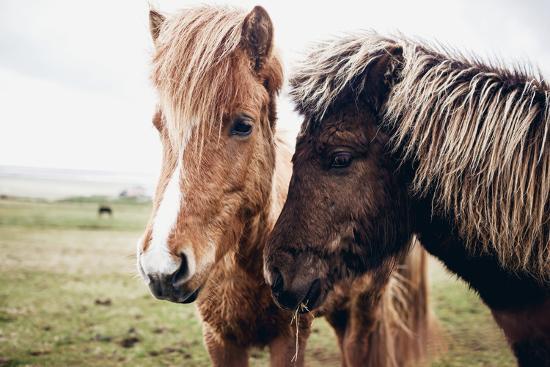 andrew-bayda-icelandic-horses