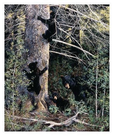 andrew-kiss-black-bear-family