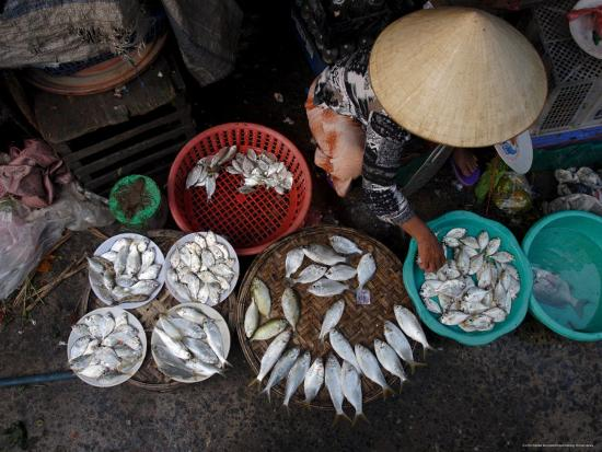 andrew-mcconnell-fresh-fish-at-the-city-market-da-nang-vietnam-indochina-southeast-asia