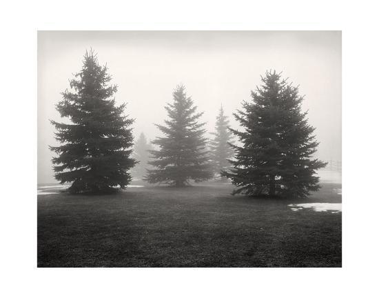 andrew-ren-tree-study-6
