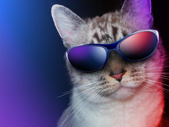 angela-waye-cool-party-cat-with-sunglasses