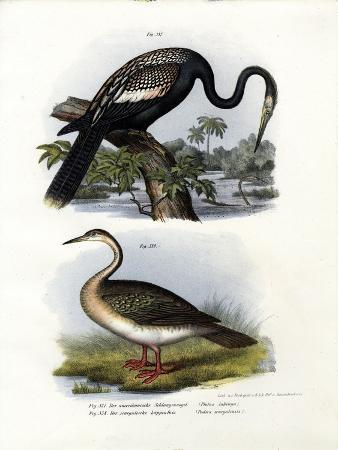 anhinga-1864