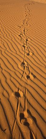 animal-tracks-on-sand-dune-namibia
