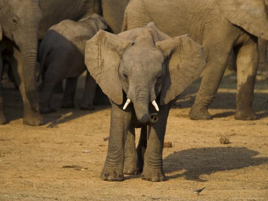 ann-steve-toon-baby-elephant-eastern-cape-south-africa