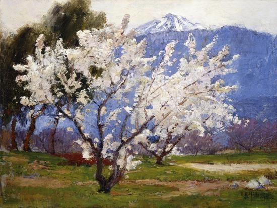 anna-hills-almond-blossoms-near-banning