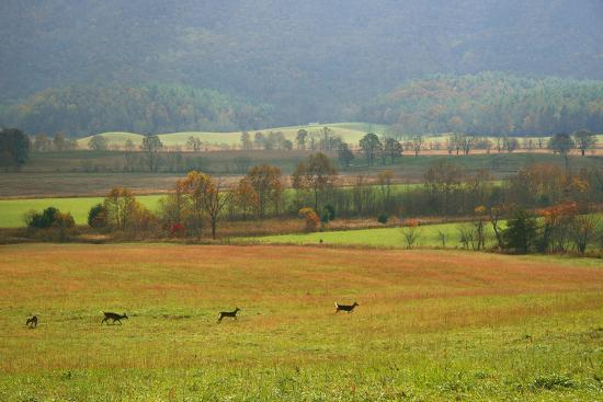 anna-miller-autumn-in-cades-cove-smoky-mountains-national-park-tennessee-usa