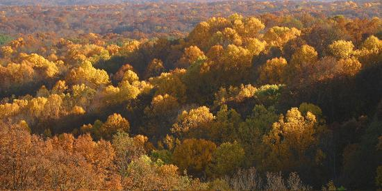 anna-miller-autumn-vista-in-brown-county-state-park-indiana-usa