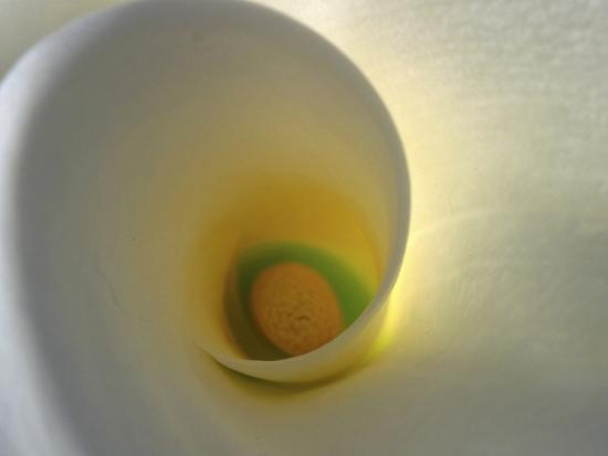 anna-miller-white-calla-lily-abstract