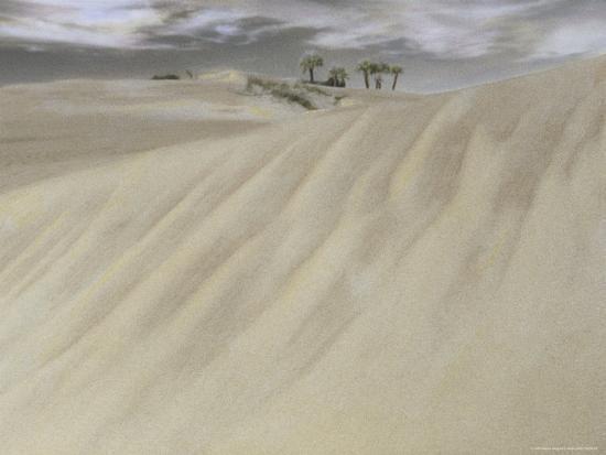 annie-griffiths-a-massive-sand-dune-dwarfs-trees-on-a-barrier-island