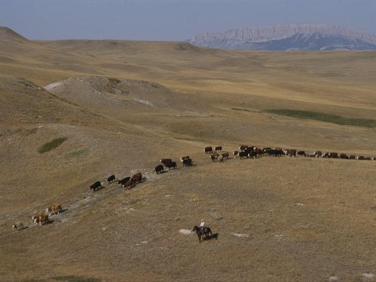 annie-griffiths-belt-cattle-drive-in-montana