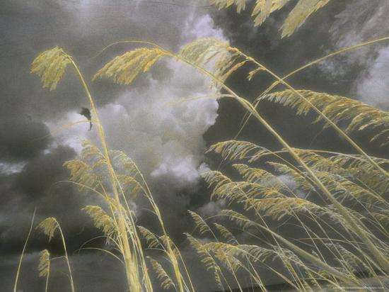 annie-griffiths-belt-sea-oats-grow-along-a-dune-on-a-south-carolina-barrier-island