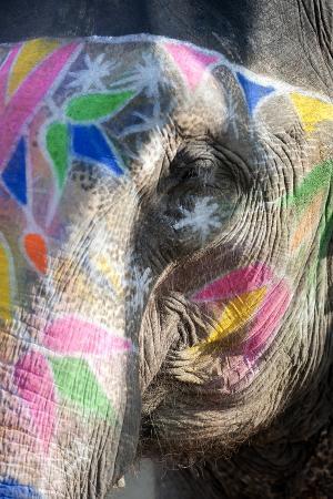 annie-owen-decorated-elephant-amber-elephant-sanctuary-near-jaipur-rajasthan-india-asia