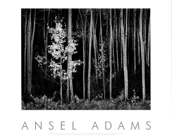 ansel-adams-aspens-northern-new-mexico-1958
