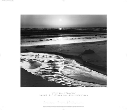 ansel-adams-birds-on-a-beach