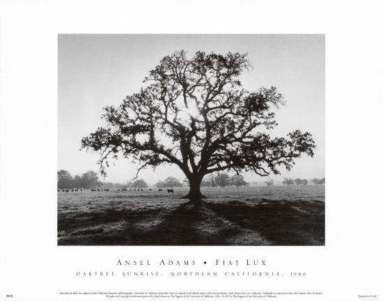 ansel-adams-oak-tree-sunrise