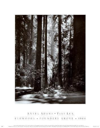 ansel-adams-redwoods-founders-grove
