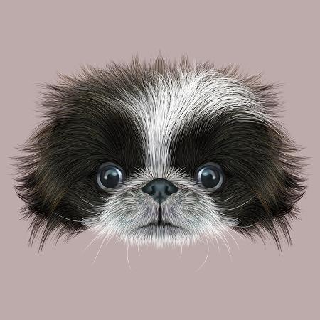 ant-art19-illustrated-portrait-of-pekingese-dog