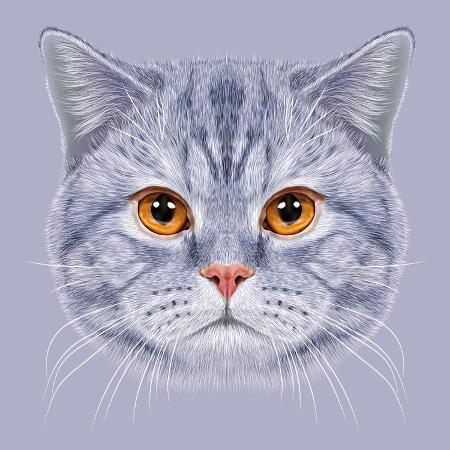 ant-art19-illustration-of-portrait-british-short-hair-cat-cute-grey-tabby-domestic-cat-with-orange-eyes
