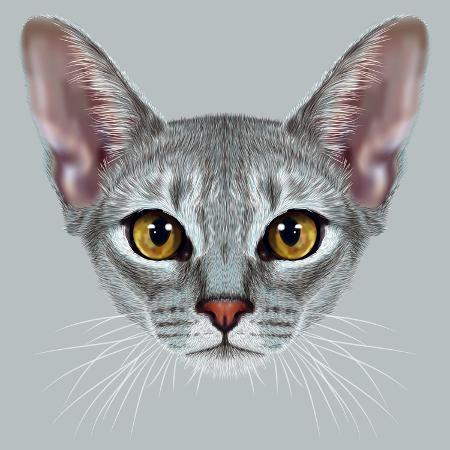 ant-art19-illustrative-portrait-of-abyssinian-cat-cute-breed-of-domestic-short-haired-cat-with-a-distinctive
