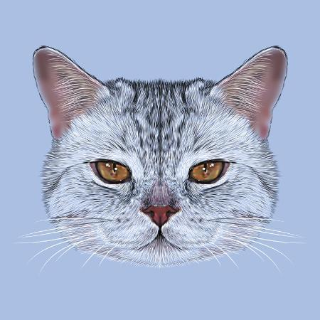 ant-art19-illustrative-portrait-of-scottish-straight-cat-cute-domestic-tabby-cat-with-orange-eyes