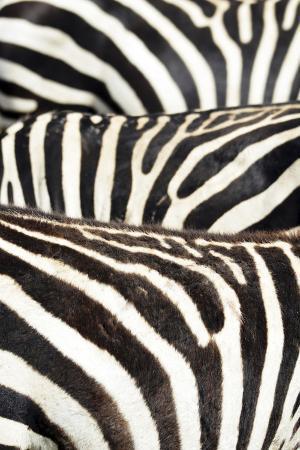 anthony-asael-kenya-amboseli-national-park-close-up-on-zebra-stripes