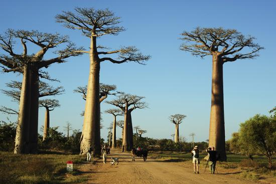 anthony-asael-madagascar-morondava-baobab-alley-tourist-taking-pictures