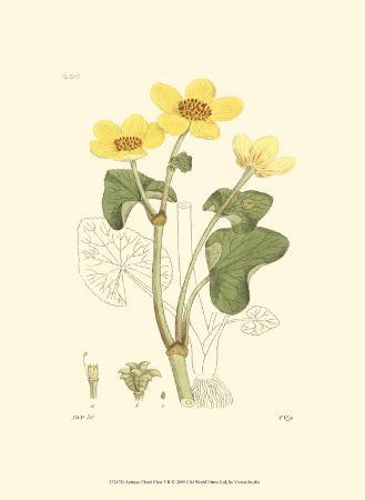 antique-floral-plate-vii