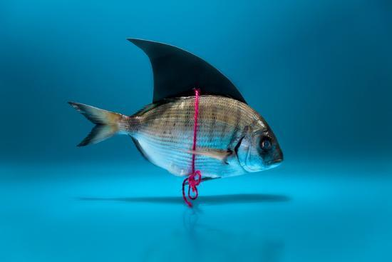 antonioiacobelli-fish-disguised-as-a-shark