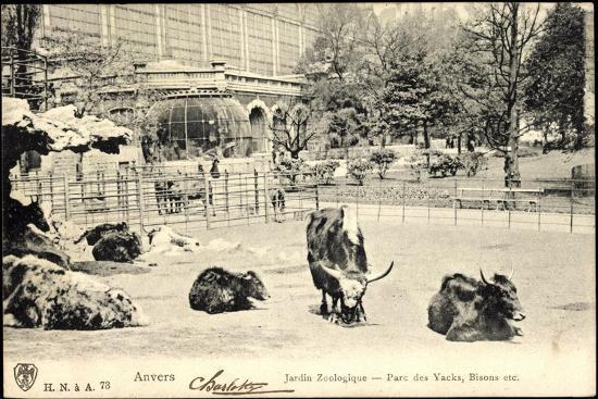 antwerpen-flandern-jardin-zoologique-parc-des-yacks-bisons-etc