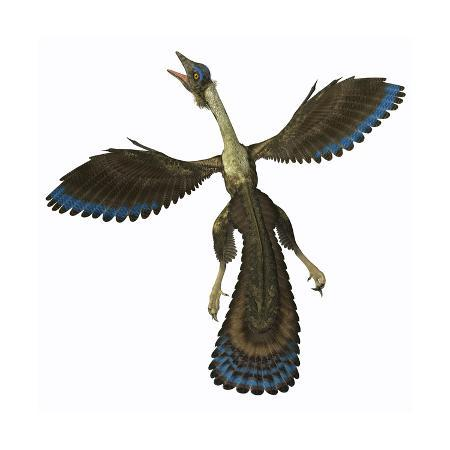 archaeopteryx-known-as-one-of-the-earliest-prehistoric-birds