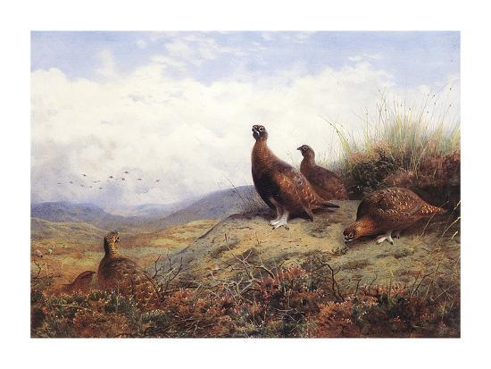 archibald-thorburn-a-group-of-red-grouse
