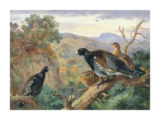 archibald-thorburn-capercaillie