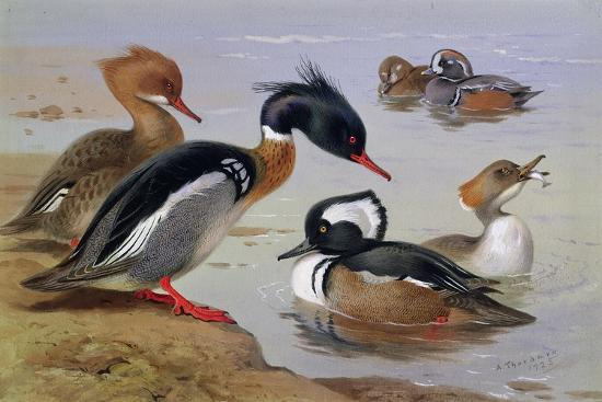 archibald-thorburn-ducks-by-a-lake
