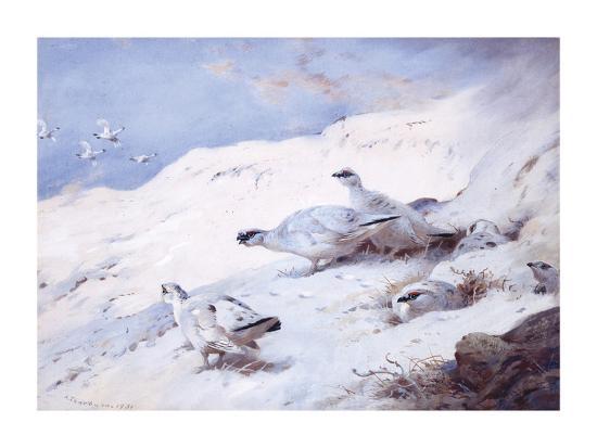 archibald-thorburn-woodcock-in-a-snowy-highland