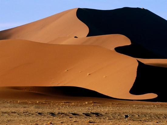 ariadne-van-zandbergen-oryx-with-sand-dunes-in-background-namib-desert-park-hardap-namibia