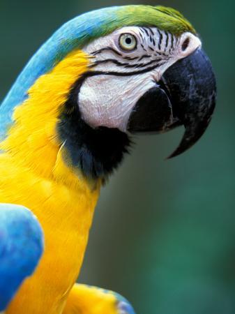 art-wolfe-blue-and-yellow-macaw-iguacu-national-park-bolivia