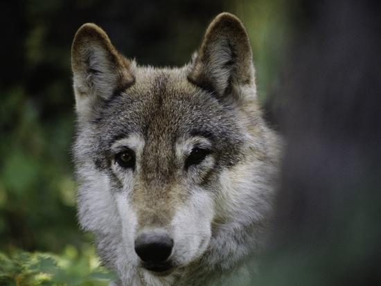 art-wolfe-watchful-2