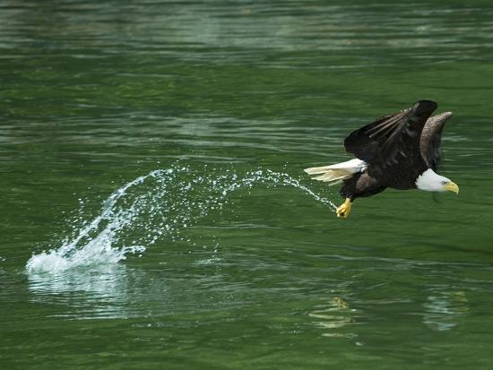 art-wolfe-water-skipping