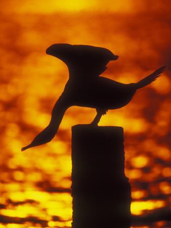 arthur-morris-silhouette-of-double-crested-cormorant-on-pile-at-sunset-jamaica-bay-wildlife-refuge-new-york