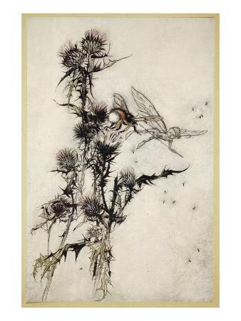 arthur-rackham-kill-me-a-red-hipped-humble-bee-on-the-top-of-a-thistle