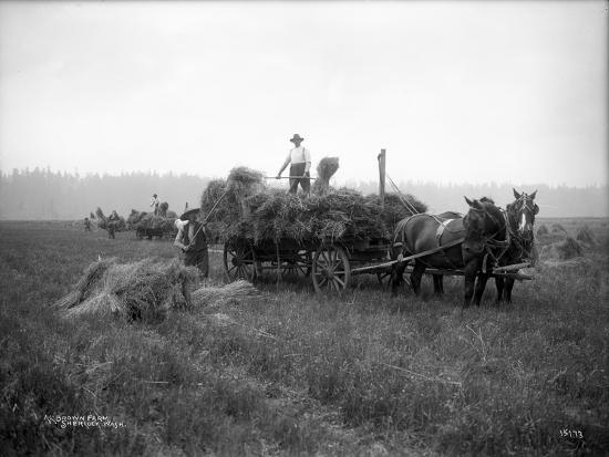 ashael-curtis-a-l-brown-farm-sherlock-washington-ca-1909