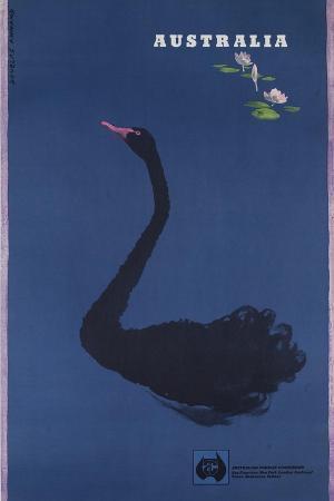 australian-travel-board-travel-poster-black-swann-ca-1950s
