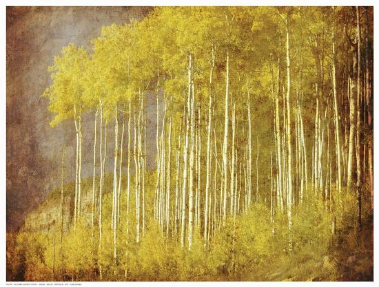 autumn-aspen-forest